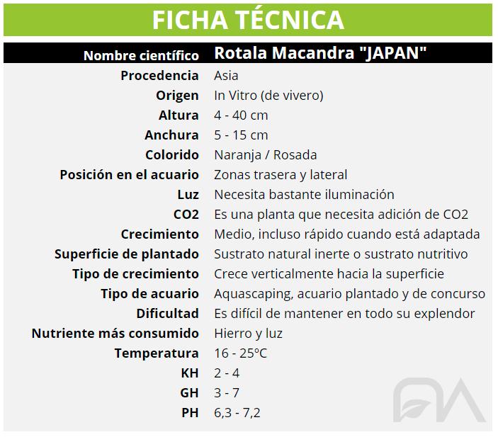 ROTALA MACANDRA JAPAN FICHA TECNICA