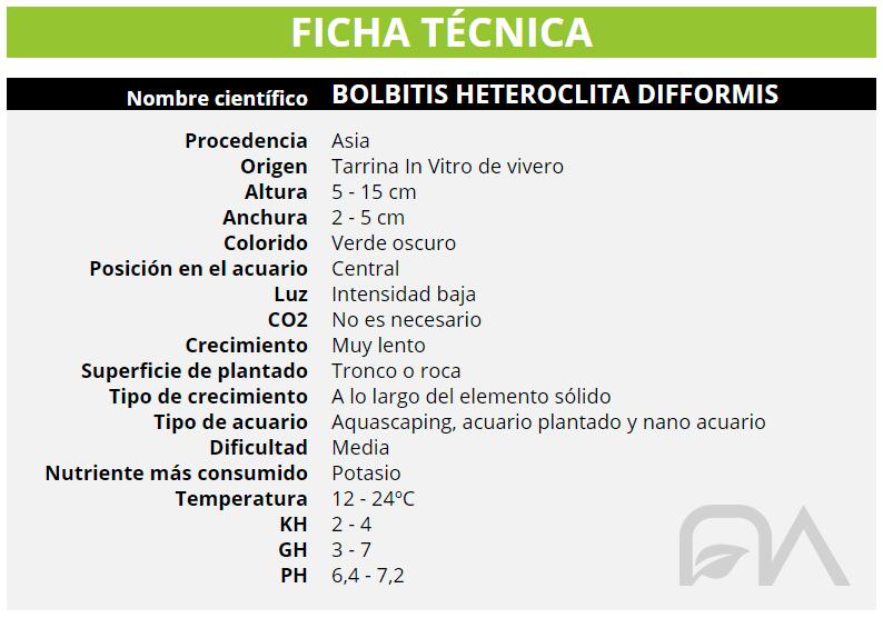 BOLBITIS HETEROCLITA DIFFORMIS