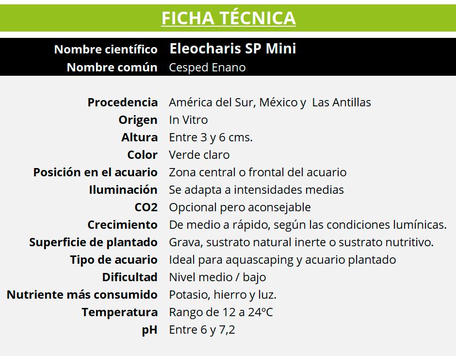 Ficha técnica de la planta acuática Eleocharis SP Mini