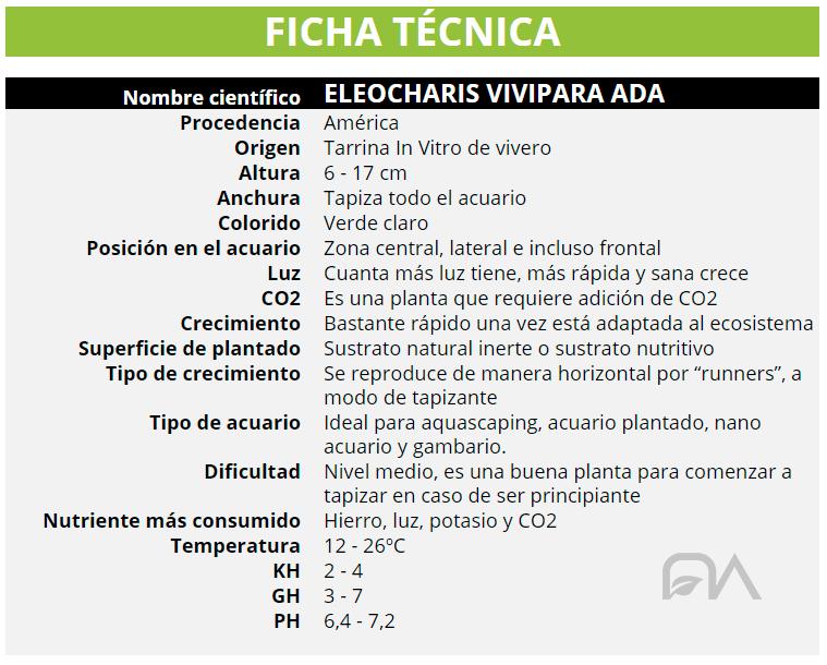 ELEOCHARIS VIVIPARA ADA