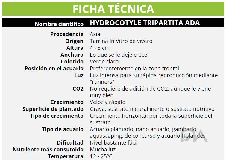 HYDROCOTYLE TRIPARTITA ADA
