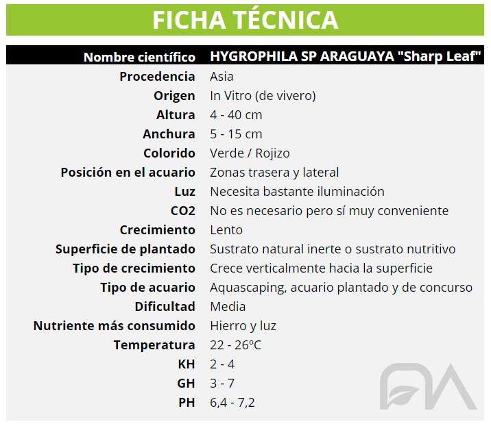 Hygrophila Araguaya Sharp Leaf FICHA TECNICA