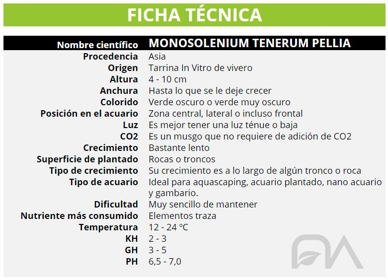 MONOSOLENIUM TENERUM PELLIA
