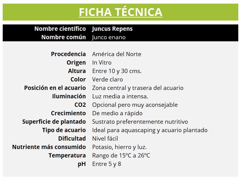Ficha técnica de la planta acuática JUNCUS REPENS