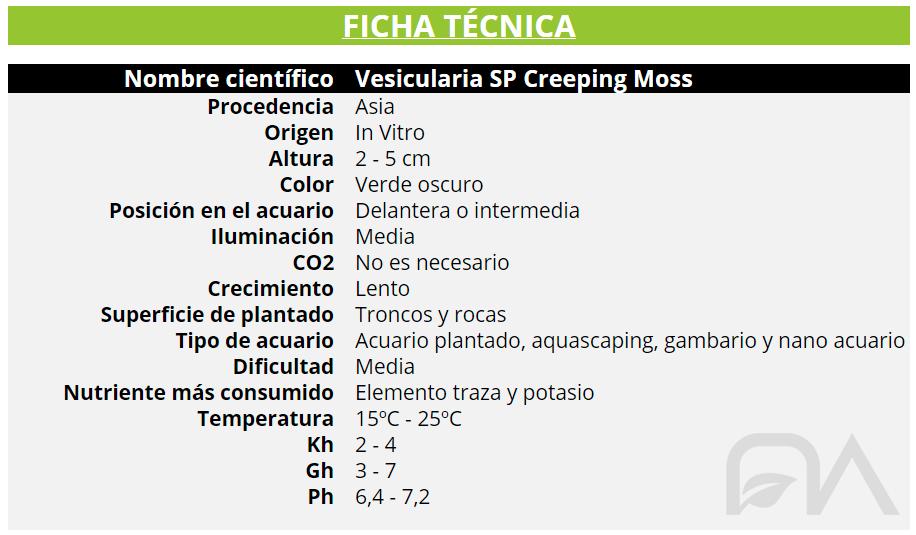 Vesicularia SP Creeping Moss FICHA TECNICA