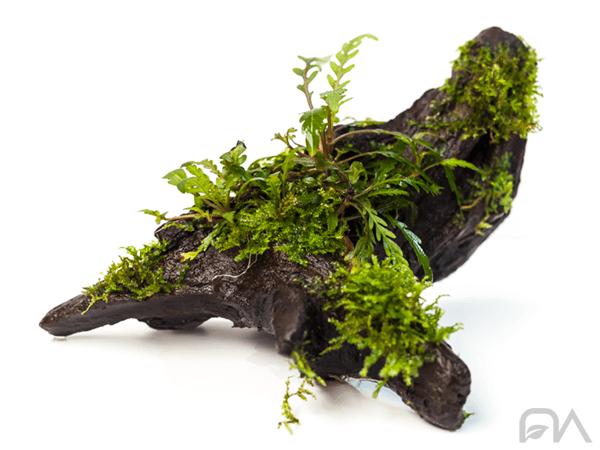 tronco con plantas
