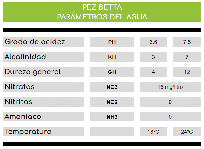 Parámetros del agua del acuario para los peces Betta