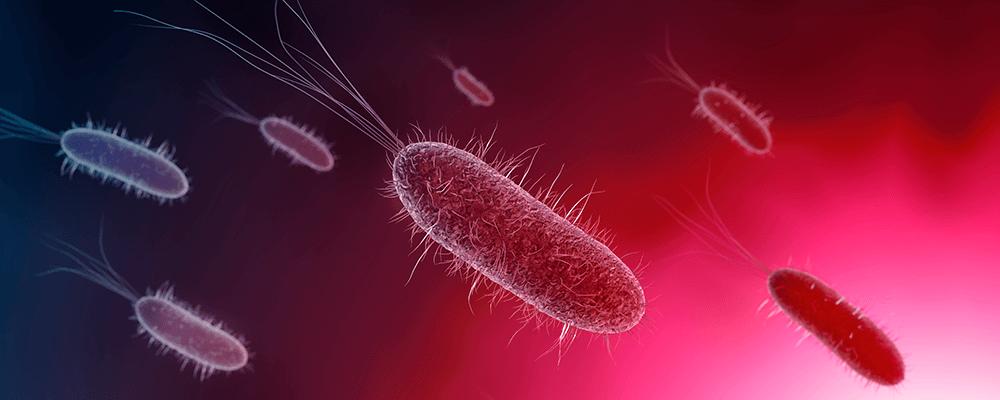bacterias ciclado