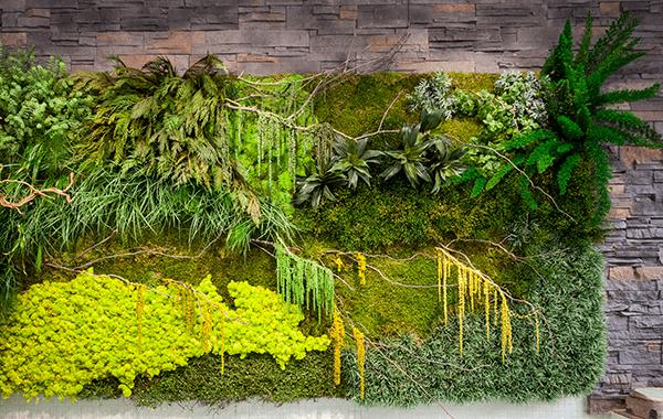 jardines verticales con plantas preservadas