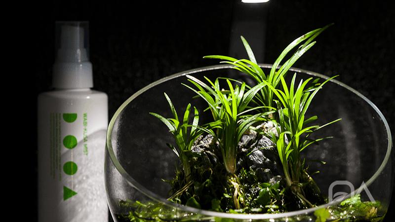 Kit Wabi-Kusa de la marca BETA para crear pequeños jardines de plantas en emergido.