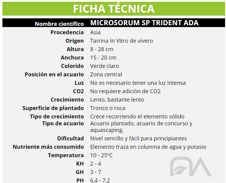 MICROSORUM SP TRIDENT ADA