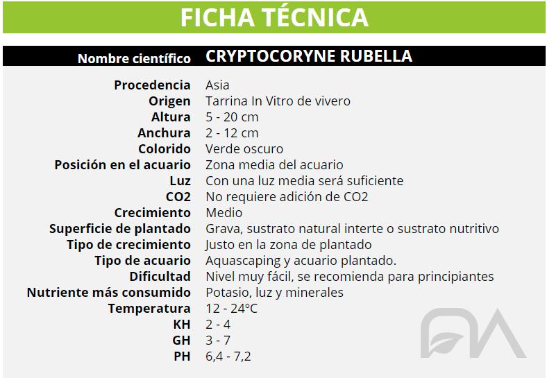FICHA TÉCNICA CRYPTOCORYNE RUBELLA