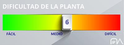 Grado de dificultad de las plantas nivel 6