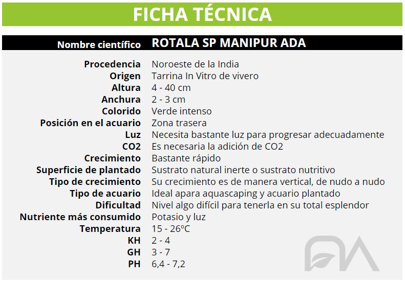 ROTALA SP MANIPUR ADA