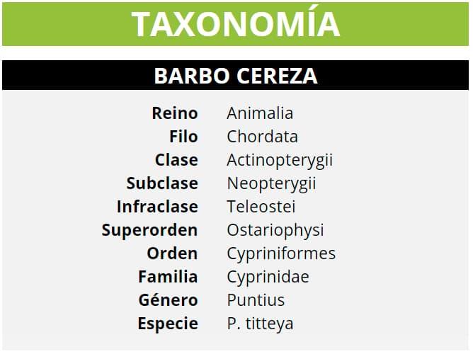 TAXONOMÍA BARBO CEREZA