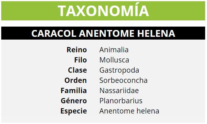 TAXONOMÍA ANENTOME HELENA