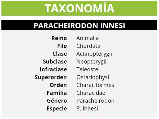 TAXONOMÍA PARACHEIRODON INNESI