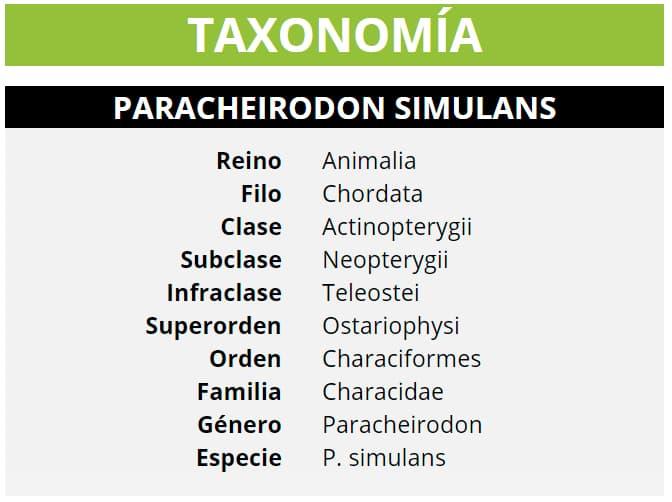 TAXONOMÍA PARACHEIRODON SIMULANS