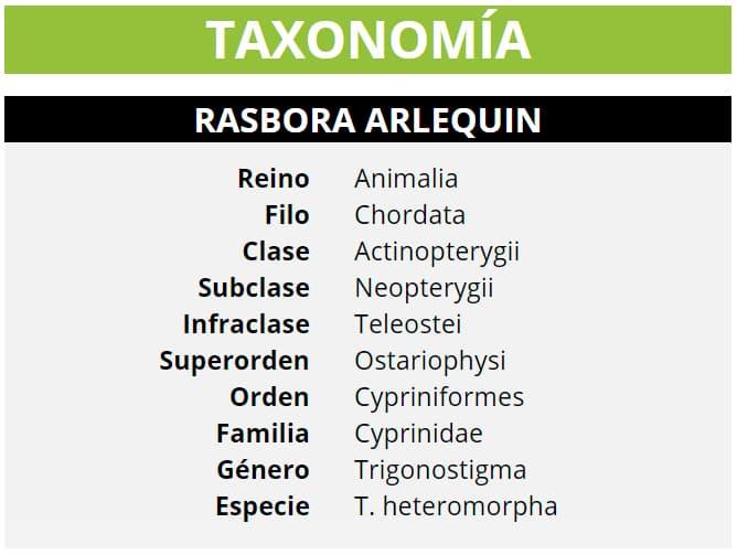 TAXONOMÍA RASBORA ARLEQUIN