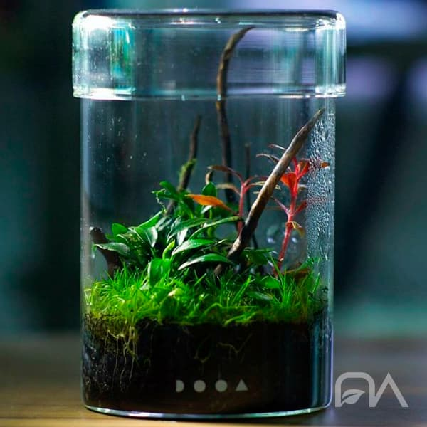 DOOA GLASS POT MARU