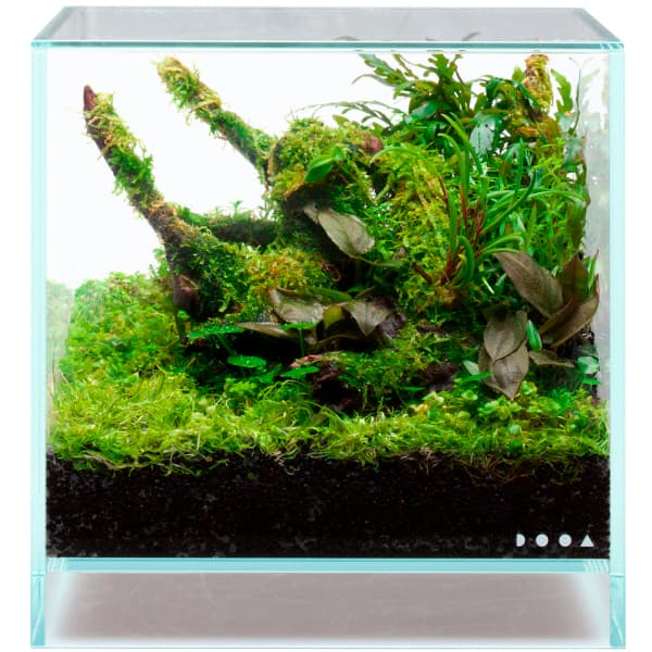 Acuario NEO GLASS de DOOA con sustratos Jungle Base y Jungle Soil