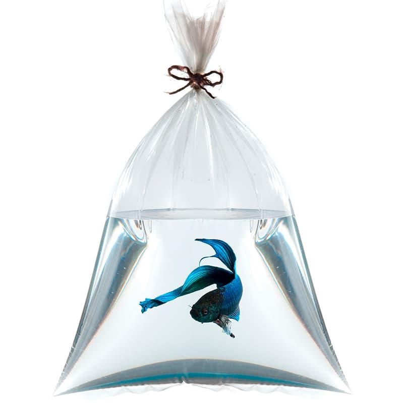 Envío de peces para acuario de agua dulce