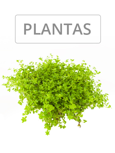 CATEGORÍA PLANTAS | NAscapers
