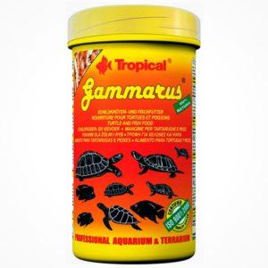 TROPICAL GAMMARUS
