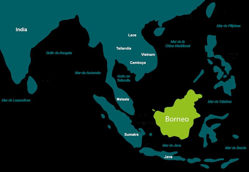 Las bucephalandra proceden de Borneo, una isla del archipiélago malayo en en sureste asiático