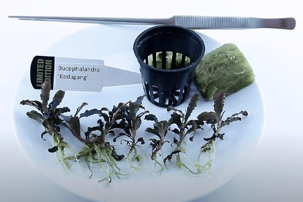 Consejos para plantar en el caso de maceta