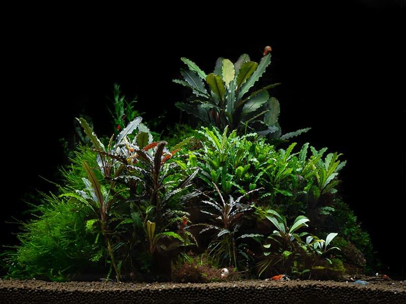 Grupo de plantas cultivadas en sumergido