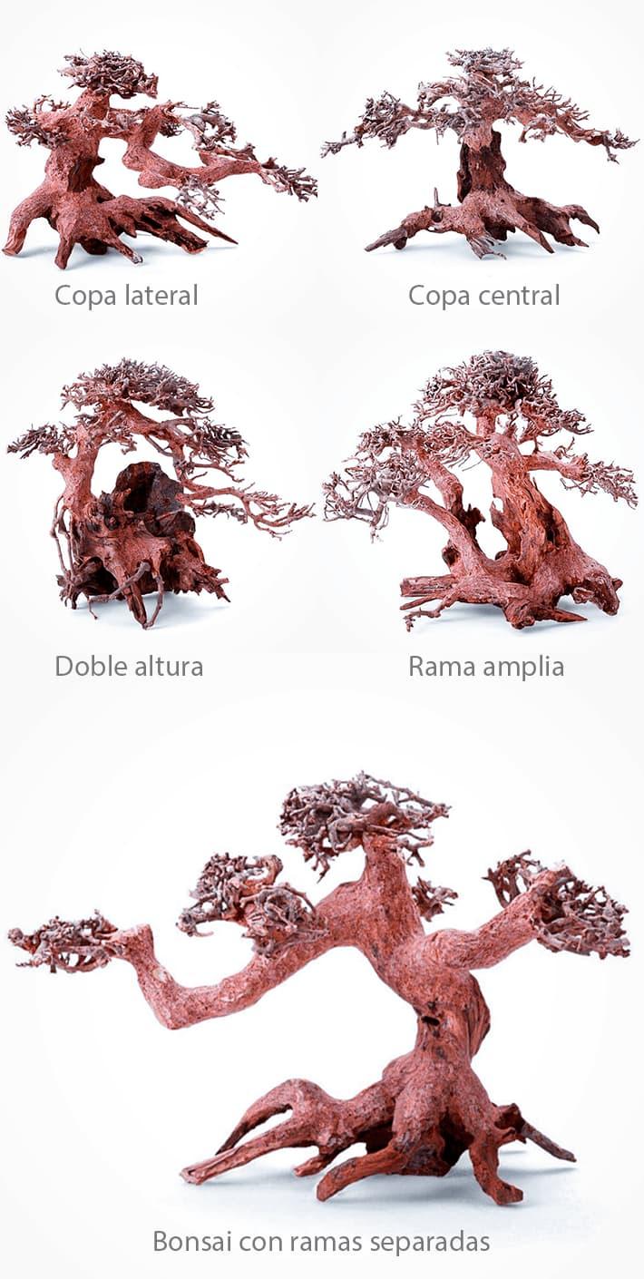 Diferentes modelos de BONSAIS para aquascaping que puedes elegir