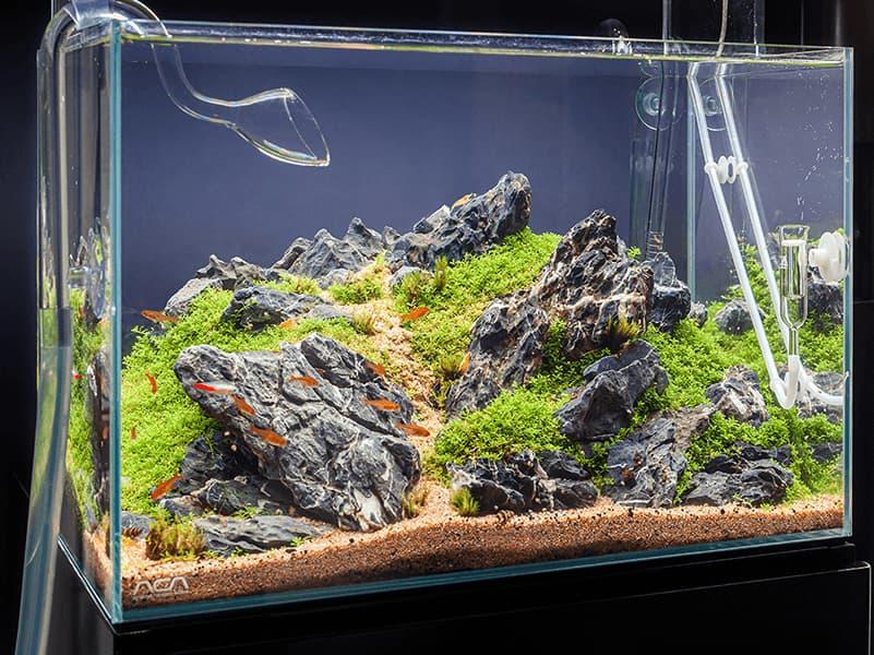 el ciclo del nitrógeno, un equilibrio fundamental en todo acuario plantado
