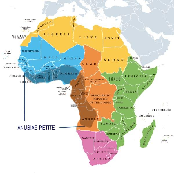 Zonas donde habitan habitualmente las anubias, del norte de Sierra Leona al sur de Angola.