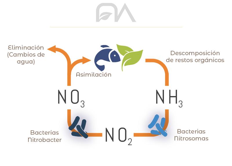 ciclo del nitrógeno, esquema