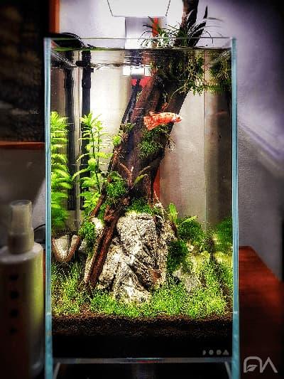 acuario plantado, la importancia del nitrógeno para tus plantas