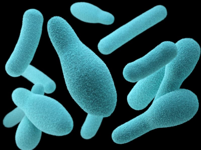 flora-bacteriana-ciclo-nitrogeno