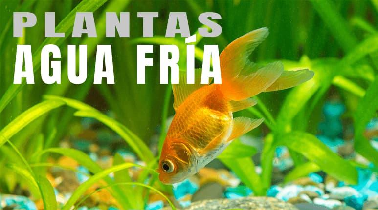 Plantas para acuarios de agua fría: Todo lo que necesitas saber