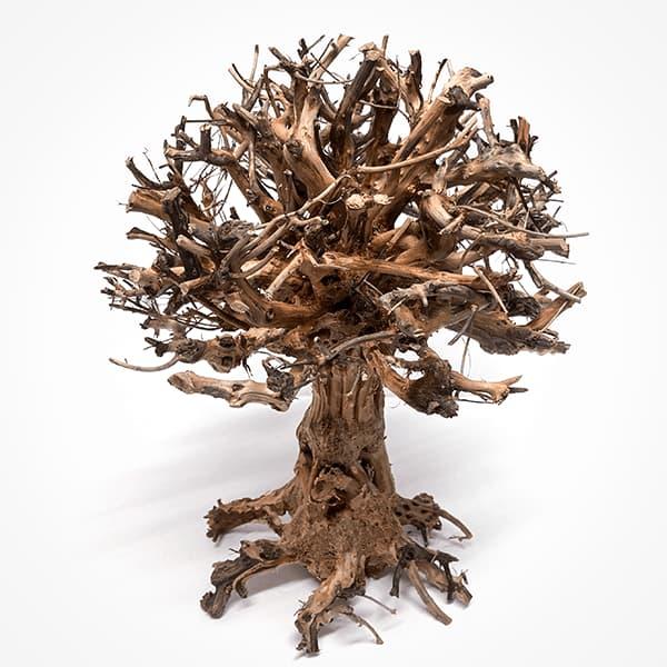 Comprar online bonsai aquascaping centenerio | NAscapers