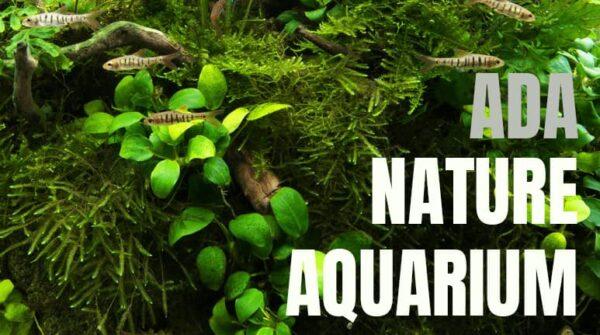 ADA los mejores productos de aquascaping del mercado.