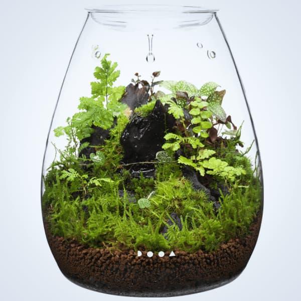 Comprar online dooa glass pot SHIZUKU