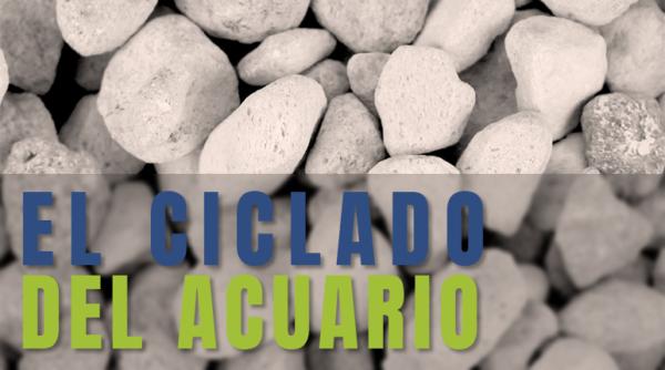 El ciclado del acuario: artículo del blog con consejos y recomendaciones.