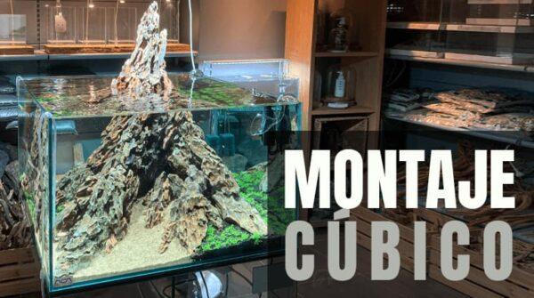 Montaje de un acuario cúbico: ideas aquascaping. Nuevo acuario en la NAscapers Gallery. Todos tus productos de acuariofilia de venta online.