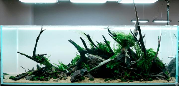Paisaje acuático diseñado de forma atractiva y armoniosa