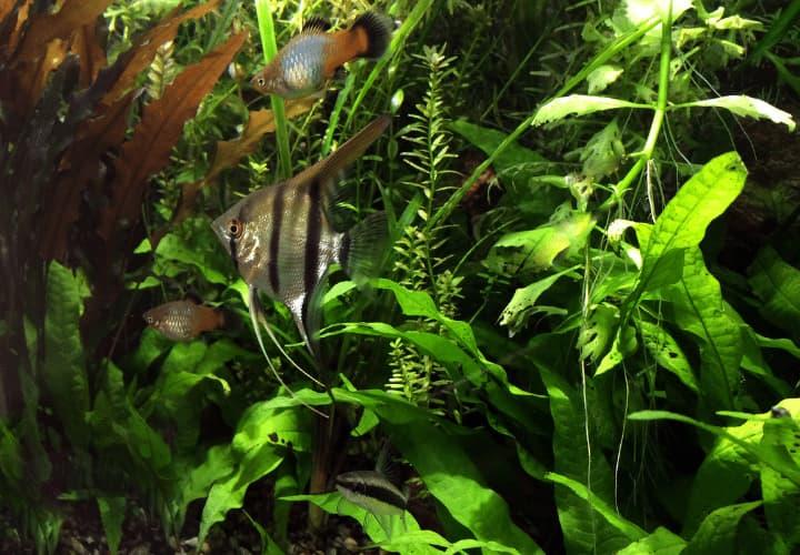 Tipo de planta helechos para acuario