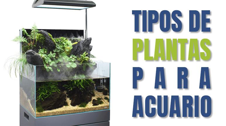 En NAscapers puedes encontrar todos los tipos de plantas para acuario que hay en el mercado y a los mejores precios. Además hacemos ofertas puntuales muy atractivas.