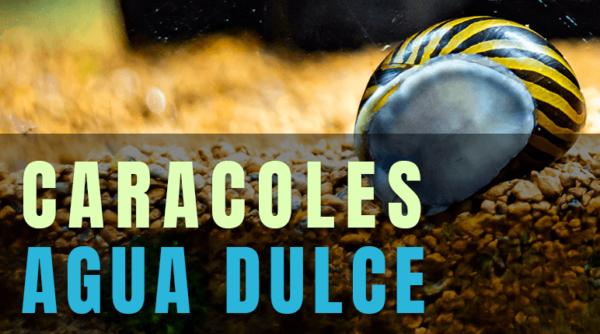 LOS MEJORES CARACOLES PARA ACUARIOS DE AGUA DULCE