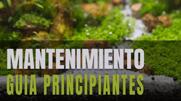 Acuario Plantado: guía de mantenimiento para principiantes.