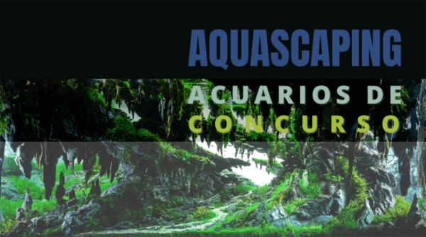 Cómo diseñar un acuario plantado para concurso.