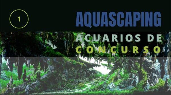 Montaje y diseño de acuarios para concurso